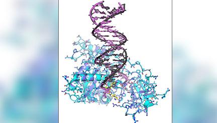 Licence en Sciences de la vie et de la terre (SVT) - Biochimie